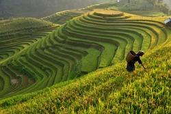 Morning Light of rice field on terrace in Vietnam Landscape.