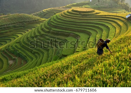 Morning Light of rice field on terrace in Vietnam Landscape. ストックフォト ©