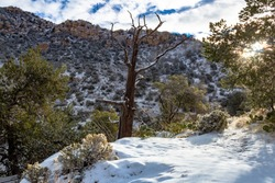 Morning light on a snow covered hiking trail. The path to Mount Kimball, called Finger Rock Trail in the Catalina Mountains north of Tucson, Arizona. Rare snowfall, trees, prickly pear cactus. 2019.