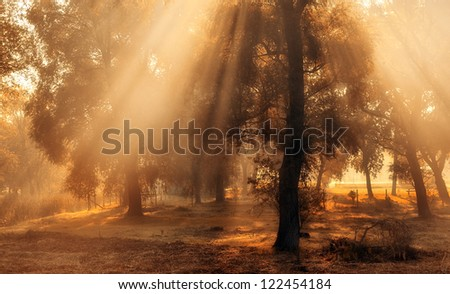 Morning lights in the forest