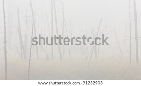 Morning mist and trees fog Saskatchewan Canada - stock photo