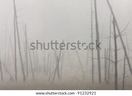 Morning mist and trees fog Saskatchewan Canada