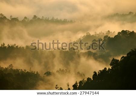 Morning Mist at Tropical Mountain Range, Malaysia