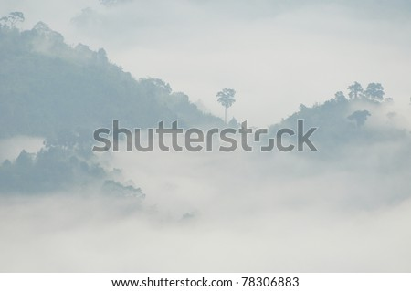 morning mist cover tree and mountain