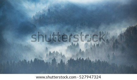 Morning mist in the forest