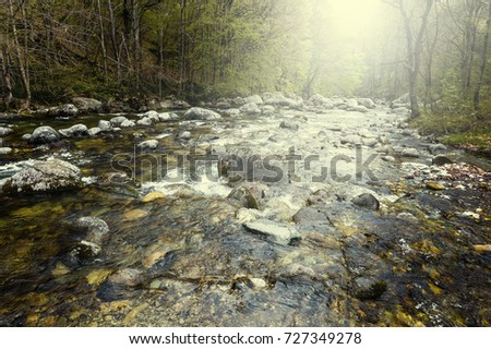 Morning mist over the stream in the Italian Alps in Piedmont. View of the forest valley with river at sunrise