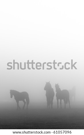 Morning mist with horses in a farmland