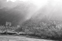 Morning misty over on forest with sun ray effect and old basketball backboard in black and white tone