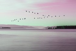 Morning mood at Lake Yellowstone with a flock of birds