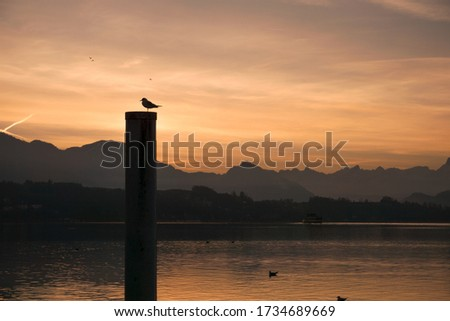 Photo of  morning mood in switzerlnad luceren witz an orange sky with birds