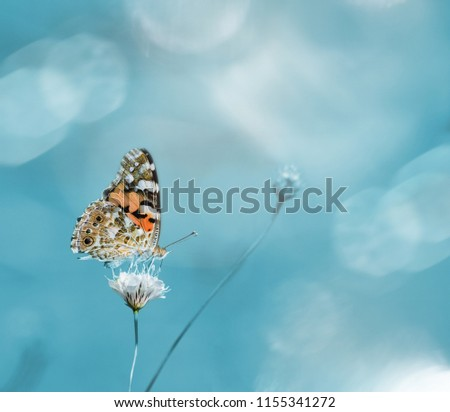 Morning nature. Lovely colorful butterfly on a meadow flower on blue background in summer. Amazing picture of the beauty of living nature.