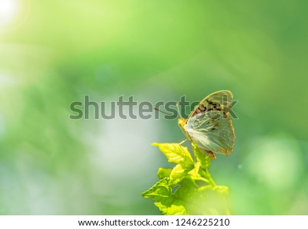 Morning nature. Lovely colorful butterfly on a tree branch on green-turquoise background in summer. Amazing picture of the beauty of living nature.