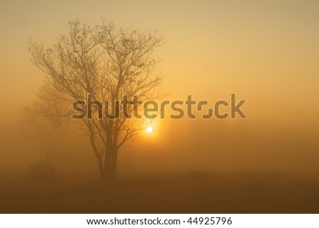 Morning on the fiel with tree,sun and fog
