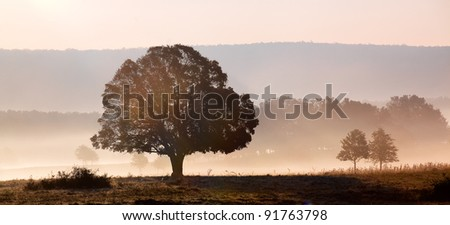Morning on the field with tree,sun and fog