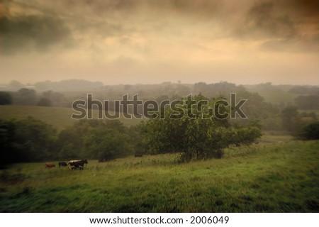 Morning rain in an Iowa pasture