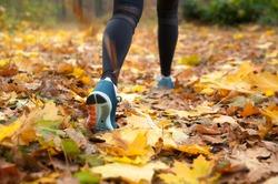 Morning run in the autumn woods