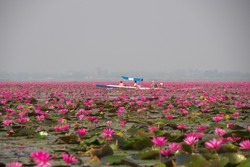 Morning scene of Red Lotus Lake or Talay Bua Daeng in Udon Thani, Thailand