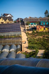 Morning scene of rural road at sunrise, through vegetable greenhouse and brick house in southern highlands of Vietnam.