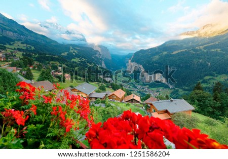 Morning scenery of Jungfrau with golden sunlight on the snowy mountaintop & Wengen village on a grassy hill overlooking Lauterbrunnen valley between vertical cliffs in Bernese Oberland, Switzerland
