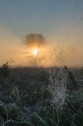 Morning spiderweb with dew and beautifully backlit tree with sun rays in fog.Copy space.