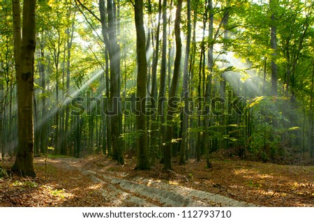 Morning sun beams in the autumn forest . Poland