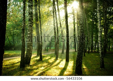 Morning sun beams in the autumn park