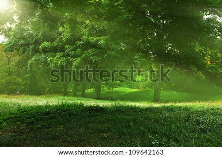 Morning sun beams in the park