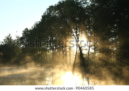 Morning sun enters the deciduous forest surrounded by mist floating over the water.