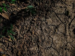 Morning sun light fall on the dry crack soil close-up shot in the forest in India.