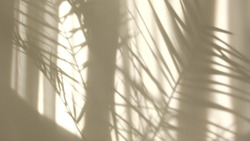 Morning sun lighting the room, shadow background overlays. Transparent shadow of tropical leaves. Abstract gray shadow background of natural leaves tree branch falling on white wall