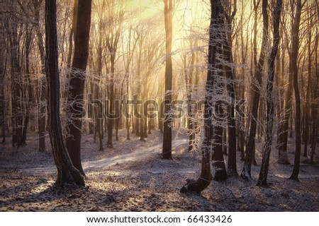 morning sun rays in a forest with frozen trees in winter