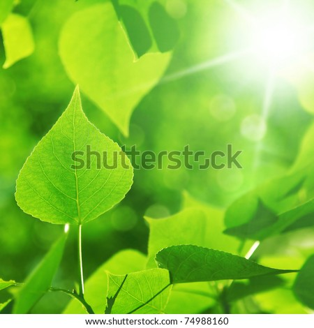 Morning sunlight and green foliage.