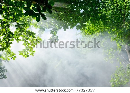 morning sunlight and smoke in tropical forest