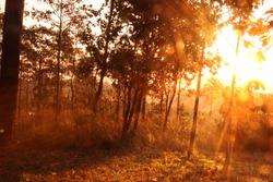 morning sunlight in forest.