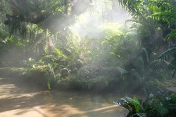 morning sunlight mist fog in park. foggy misty garden. water spraying from sprinkler for watering plant