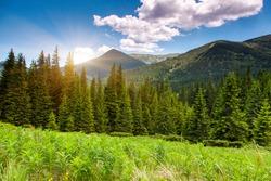 Morning sunny day is in mountain landscape. Carpathian, Ukraine, Europe. Beauty world.