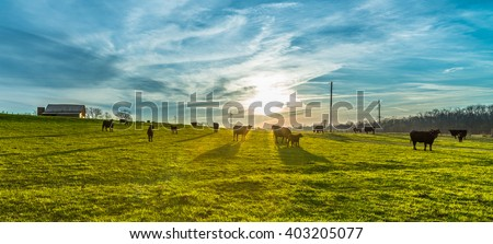 Morning Sunrise with Cows #403205077