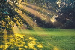 Morning urban landscape. Sun rays behind the trees in the park.