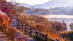 Morning view of trail and handrail with maple silver grass against fog on pond at Incheon Grand Park near Incheon, South Korea
