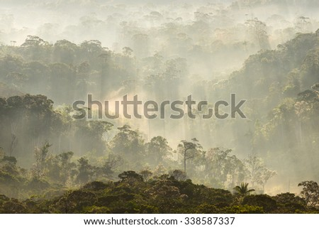 Morning view with hazy atmosphere, of the Gran Sabana (Great Savannah) forests in Canaima National Park, Venezuela.