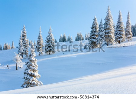 Morning winter calm mountain landscape with beautiful fir trees  on slope (Kukol Mount, Carpathian Mountains, Ukraine)