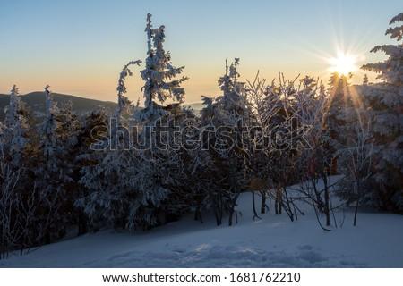 Morning winter sun above snow capped trees in the forests of Polish Mountains during a hike, Babia Góra, Poland (Poranne zimowe słońce nad ośnieżonymi drzewami lasów w polskich górach) Zdjęcia stock ©