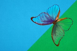 Morpho butterfly on abstract pastel background. Green and blue background. Green and Blue cardboard. Green and Blue paper texture background. Abstract geometric diagonal flat composition.