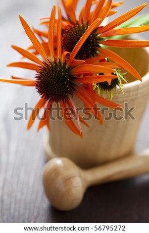 mortar and pestle with echinacea flowers - beauty treatment