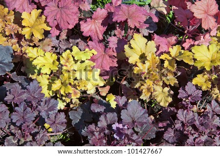 Mosaic of different colored leaves