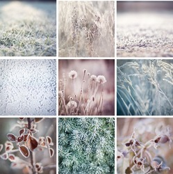 Mosaic of photos of nature during winter. Frozen grass, bush, leaves and buds. Winter postcard background glass freeze. Christmas, boxing day, mosaic. Winter in forest. Nature in winter. Macro