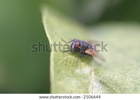 mosca Foto stock ©