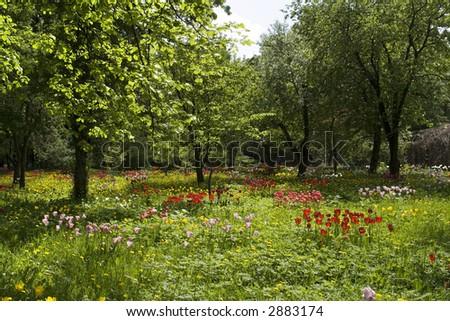 Moscow. 'Apteka kitchen garden' on avenue kingdom. Field as from blossom. Zdjęcia stock ©