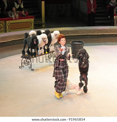 "MOSCOW, RUSSIA - NOVEMBER 27: The presentation of the ""Golden Buff"". The trained dogs of the Moscow State Circus on November 27, 2011 in Moscow, Russia"