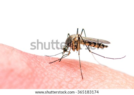 Mosquito bite isolated on white